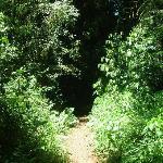 Camino al MOCONA