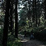 diverse scenery - magical woods
