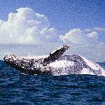 Dolphins and Whale watching at the 4-star Peermont Mondazur at San Lameer, KwaZulu-Natal
