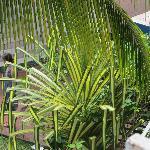 local plants