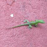 local lizzard their fun to watch