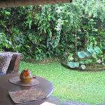 Kodok 2 personal garden