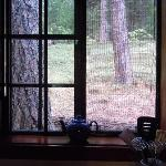 Charming Sugar Pine Cabin - view from kitchen window
