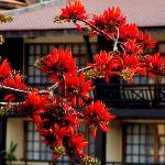 Beautiful flowering tree in hotel garden