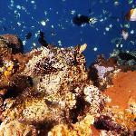 Photo of Lumbalumba Diving