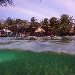 Snorkeling in frontyard