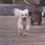 Our hostel mascot, Luke (the dog, not the otter)