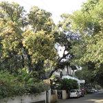 Photo of Swaroop Hotel