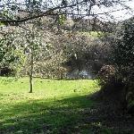 Pond in garden at Trengilly