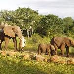 The Elephants at The Elephant Camp