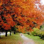 Beautiful in the fall!