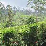 tea plantations on hills