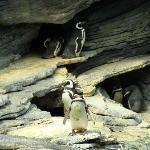 pinguins no oceanario