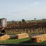 picnic in the vineyards at Benovia