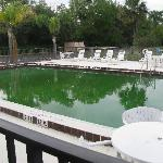 The pool outside, green with moss on sides!