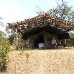 Foto di Ol Pejeta Bush Camp, Asilia Africa