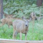 Deer behind our campsite in Lower Pines