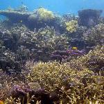 Amazing reefs in Sorido Bay's frontyard