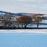 Colyton fields under snow