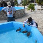 dando de comer a las tortugas