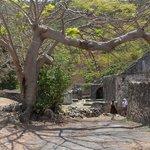 Strolling around the ruins of Annaberg Sugar Plantation