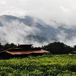 Nyungwe Forest Lodge Foto