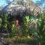 One with nature, beautiful thatched roof
