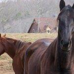 Blanche Manor Horseback Riding