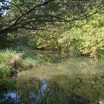 Naturschutzgebiet Taubergiessen