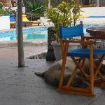 Sea lions asleep in pool bar area