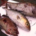5月の釣果の一部(当日の夕食)