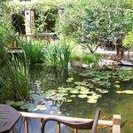Garten mit Fischteich