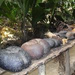 il cocco di mare