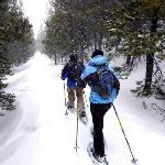 Snowshoe rentals & cross country skiing trails in Winter