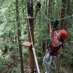 Arcata's Redwood Canopy Tour