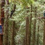 Canopy Tour