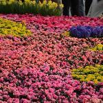 HK Flower 2