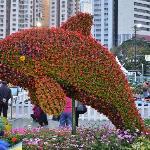 HK Flower 7