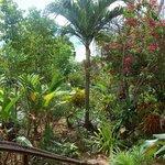 Judy House Tropical Garden is really spectacular