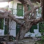 The big garden tree and the rooms