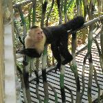 monkey hanging out on walkway