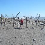Driftwood beach fascinating