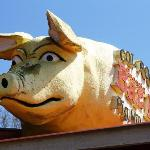 pigs on the roof
