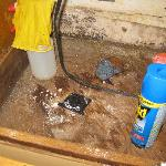 Disgusting cupboard under kitchen sink