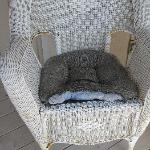 Chewed cushion on chair on lanai - would you want to sit here?