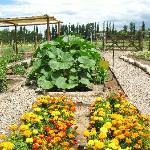 Our finca garden.