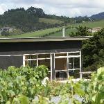 Vineyard Bach