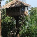 Tree house, Thong Pha Phoom National park
