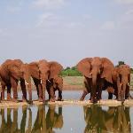 Elefanti al Tsavo Est
