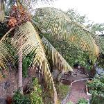 ask the staff for some fresh coconut juice and you can watch them get it from the trees in the g